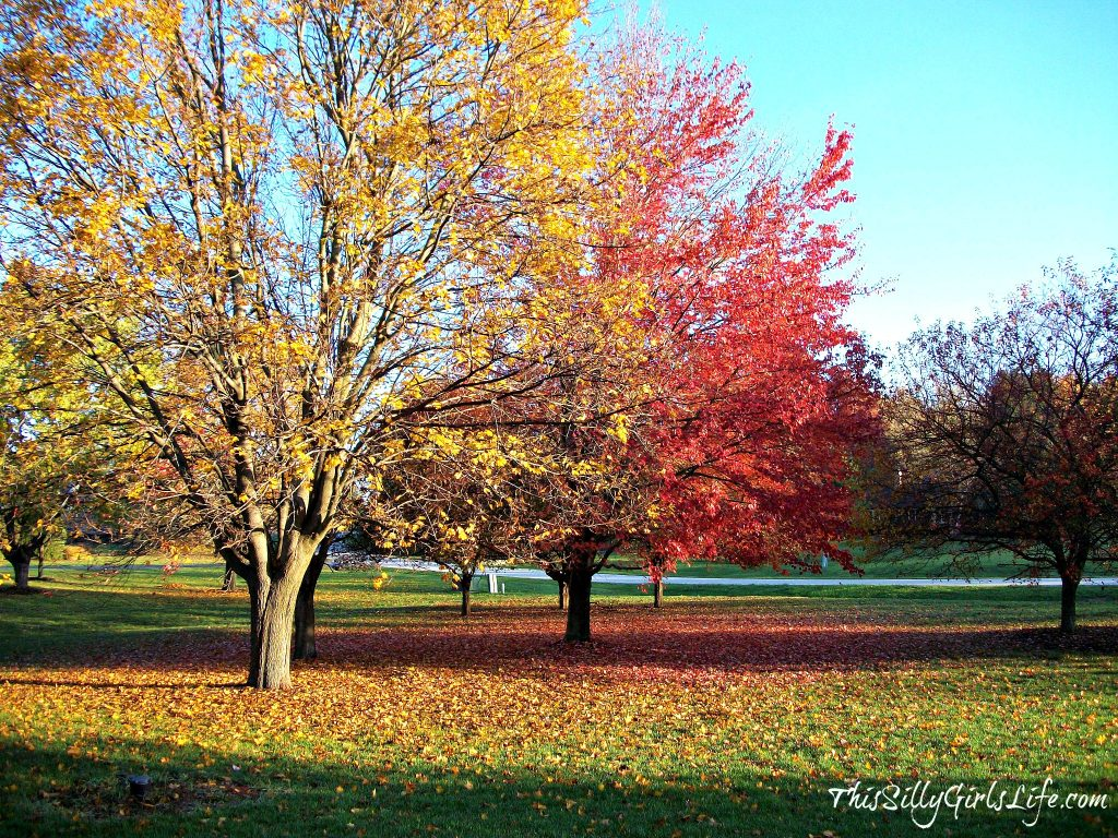 Fall Colors in Chicago ThisSillyGirlsLife.com