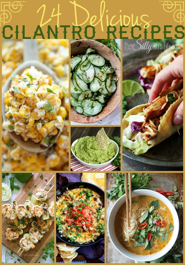 24 Delicious Cilantro Recipes, a round up of tantalizing dishes featuring the popular herb cilantro! - ThisSillyGirlsLife.com